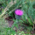 Synchronicity: Flat Tires and Disco Thistles