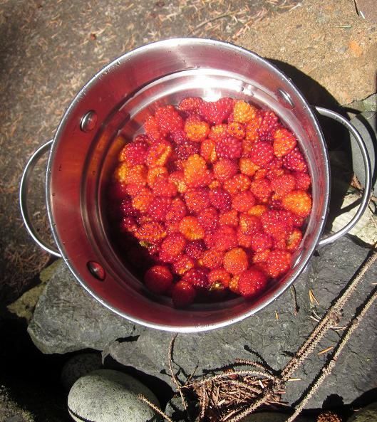 Salmonberry5