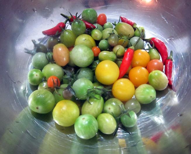 Green Tomatoes2